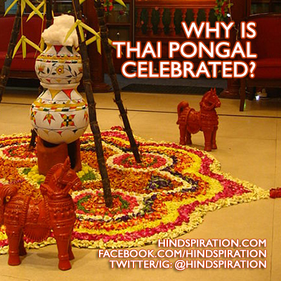 why-is-thai-pongal-celebrated