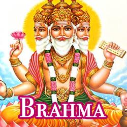 hinds-brahma